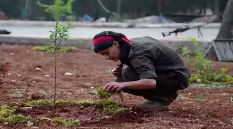 YPG Tree